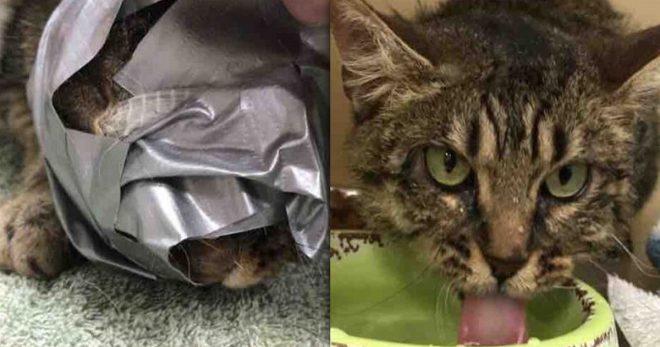 И только носик торчал: кошке замотали мордочку липкой лентой и бросили у дороги