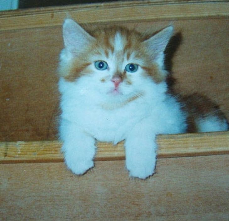 Раббл — самый старый кот в мире, которому недавно исполнилось 30 лет