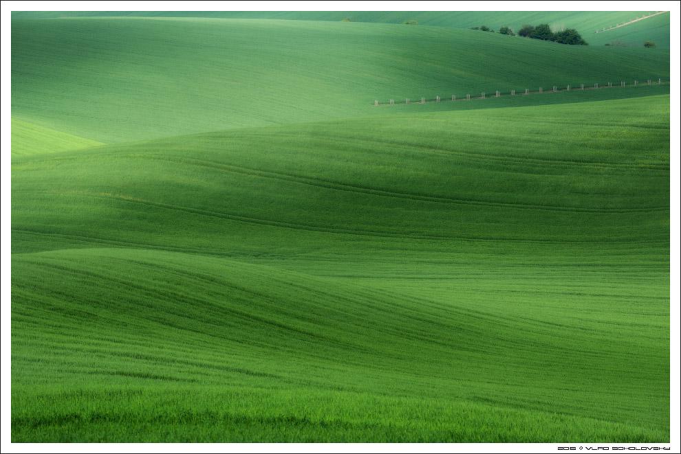 50 оттенков зеленого
