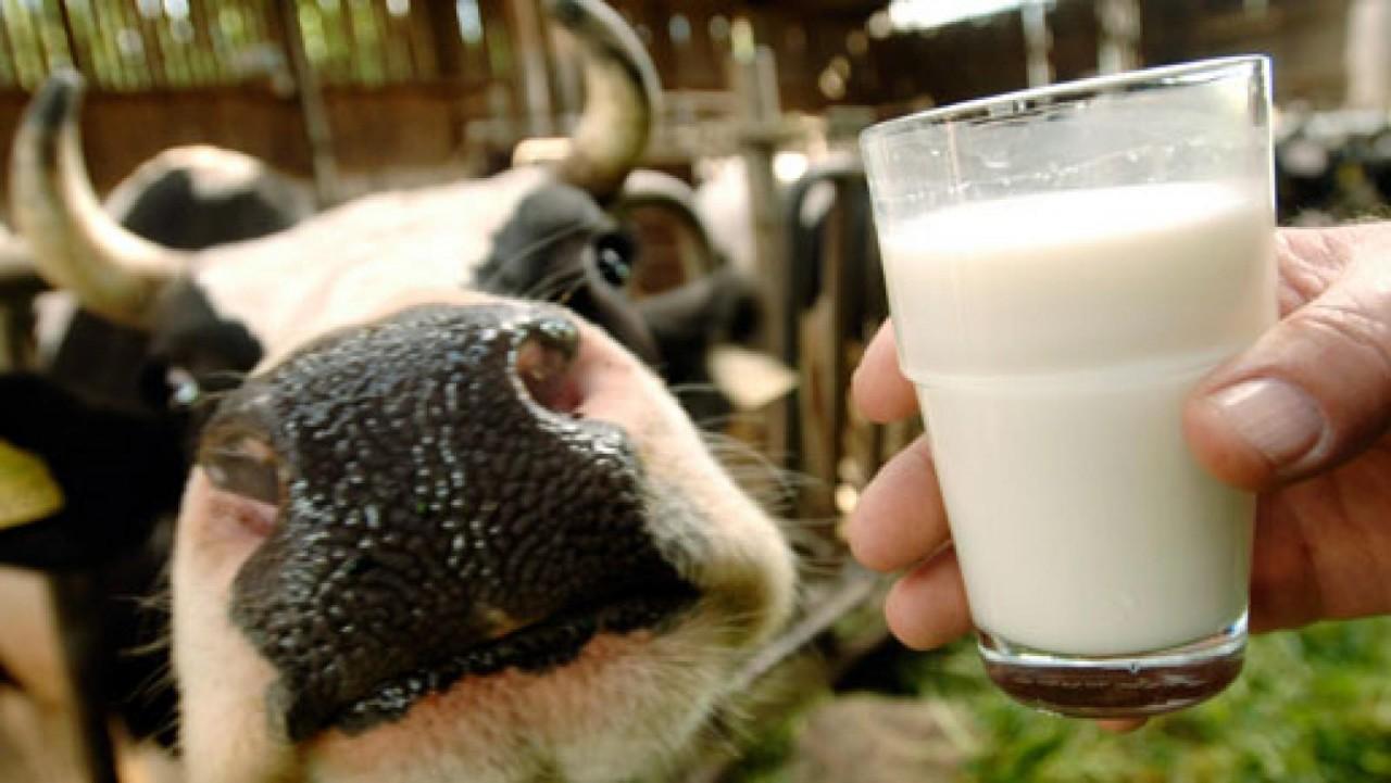 Молоко — польза или вред. Пи…