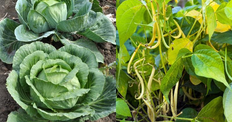 совместные посадки овощей и цветов