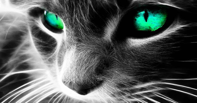 Как кошки защищают вас и ваш дом от духов и негатива