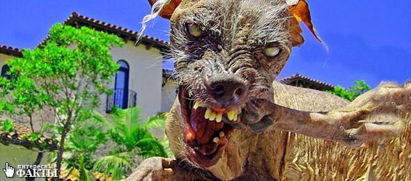 Как за 100 лет изменились породистые собаки, в связи с селекцией