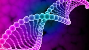 Структуры ДНК используют при…