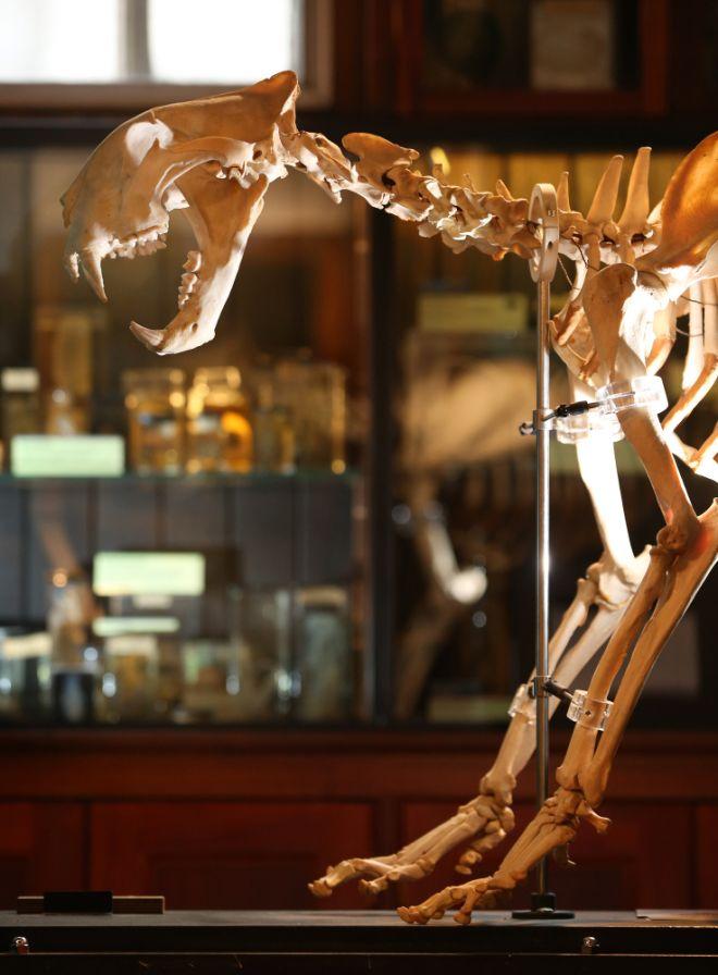 gmoz32 Лондонский музей зоологии и сравнительной анатомии Гранта