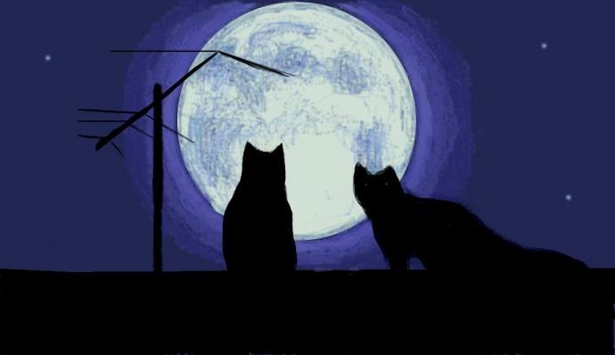 Паранормальная котивность или что делают коты ночью, когда вы спите