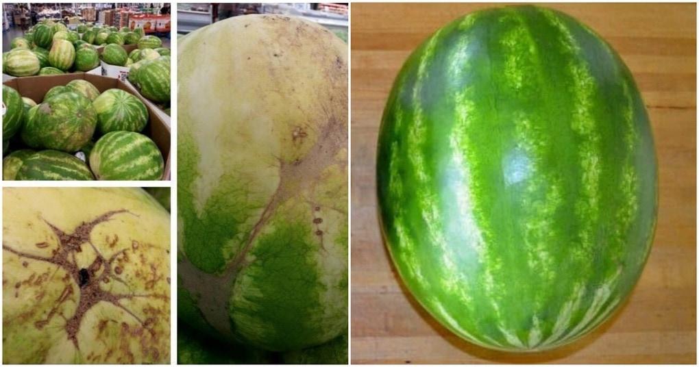 Пять ключевых советов для выбора идеального арбуза