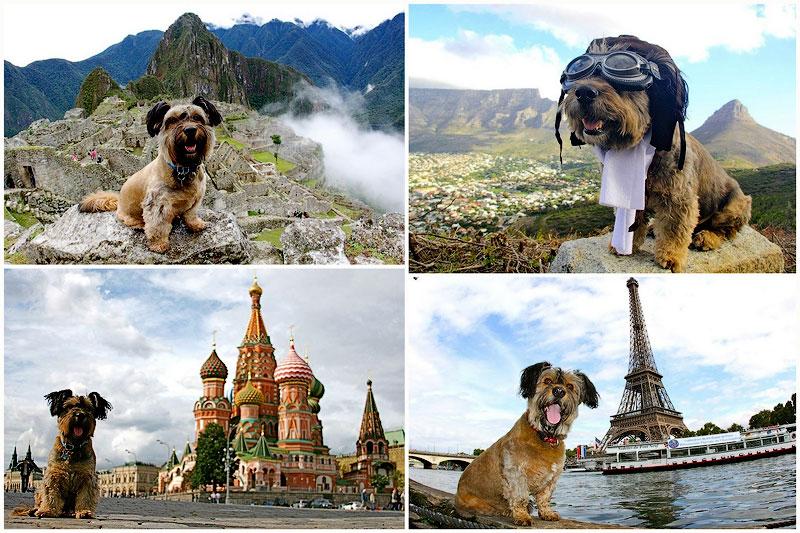 Оскар – пес-путешественник