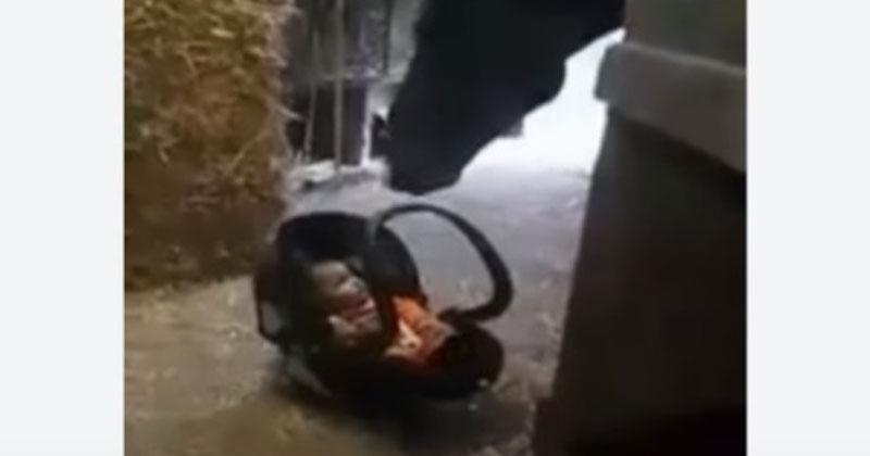 Мама оставила малыша в конюш…