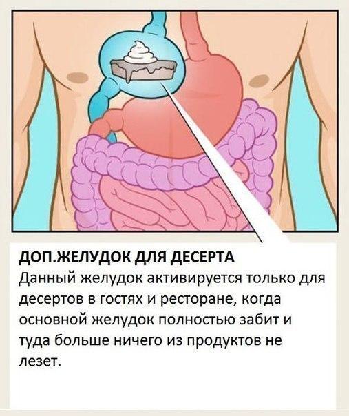 Органы, о существовании которых вы не знали.