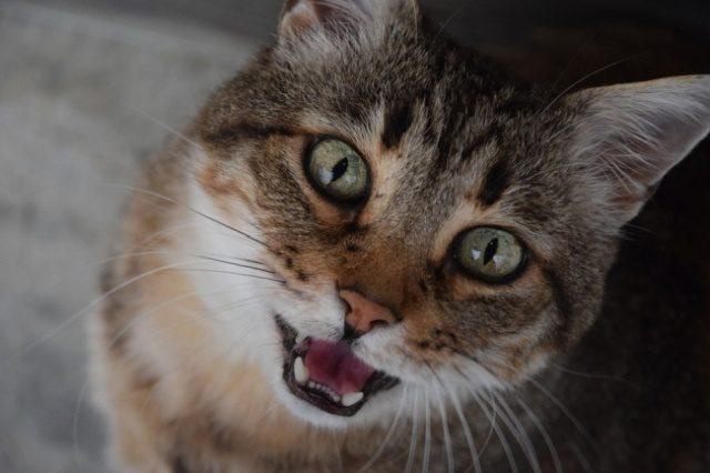 Вот какую интересную добычу кот принес своему хозяину