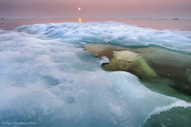 Забавные фото победителей конкурса Wildlife Photographer of the Year