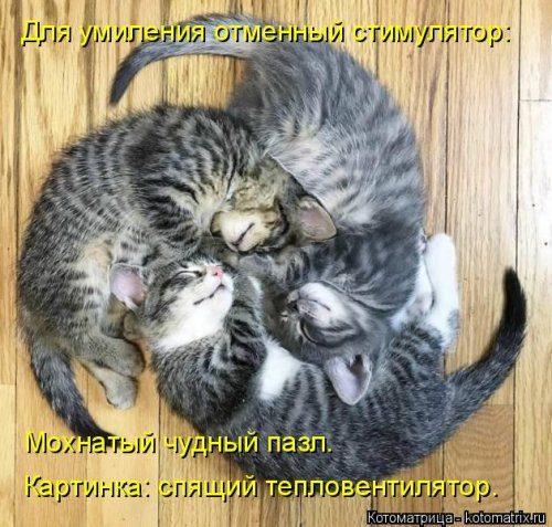 Новая порция котоматриц