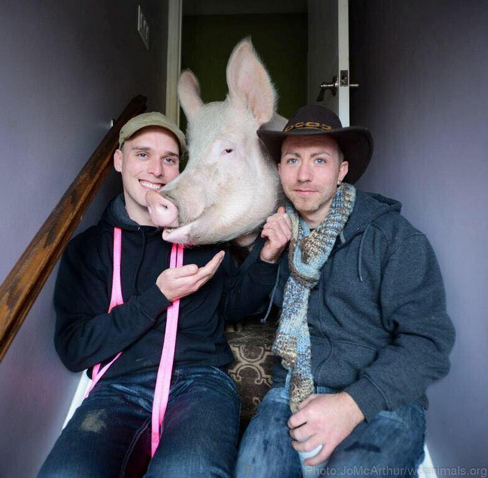 Чем закончилась мечта о декоративной свинке
