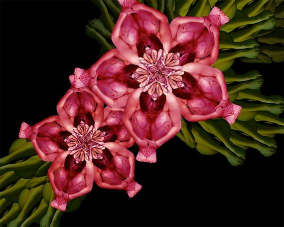 Сесилия Уэббер: Human Flowers