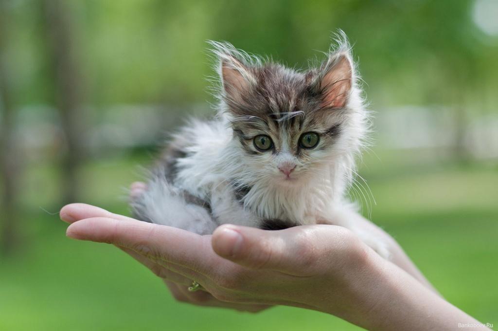 30 доказательств, что кошки делают этот мир лучше