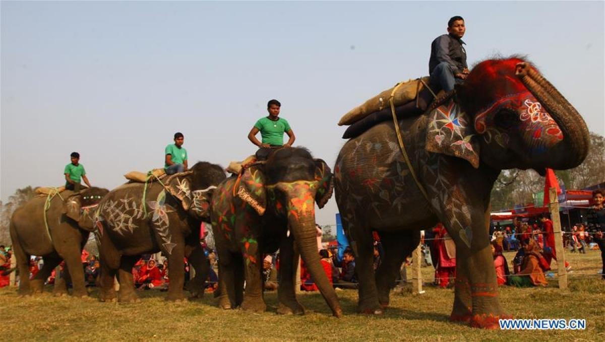Непал. Победители 15-го конкурса  красоты  среди слонов