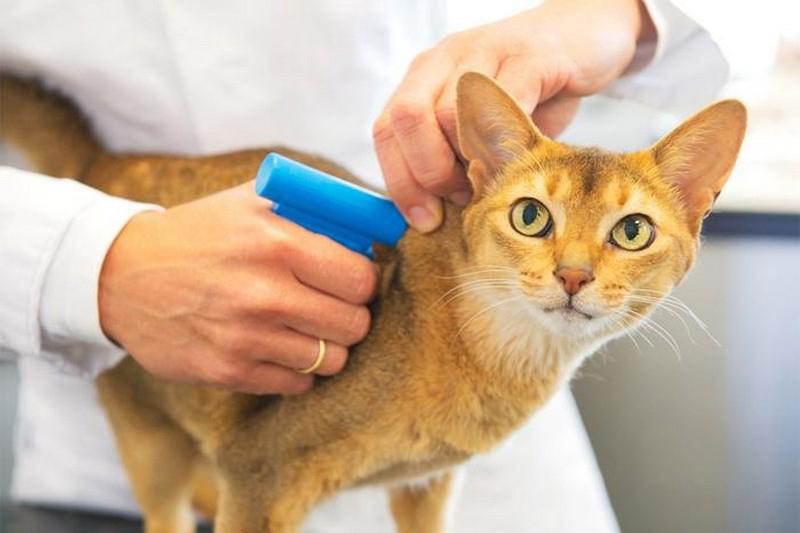 До 31 декабря 2021 года россиянам нужно зарегистрировать своих кошек и собак