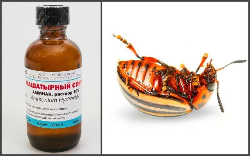 Нашатырный спирт против насекомых