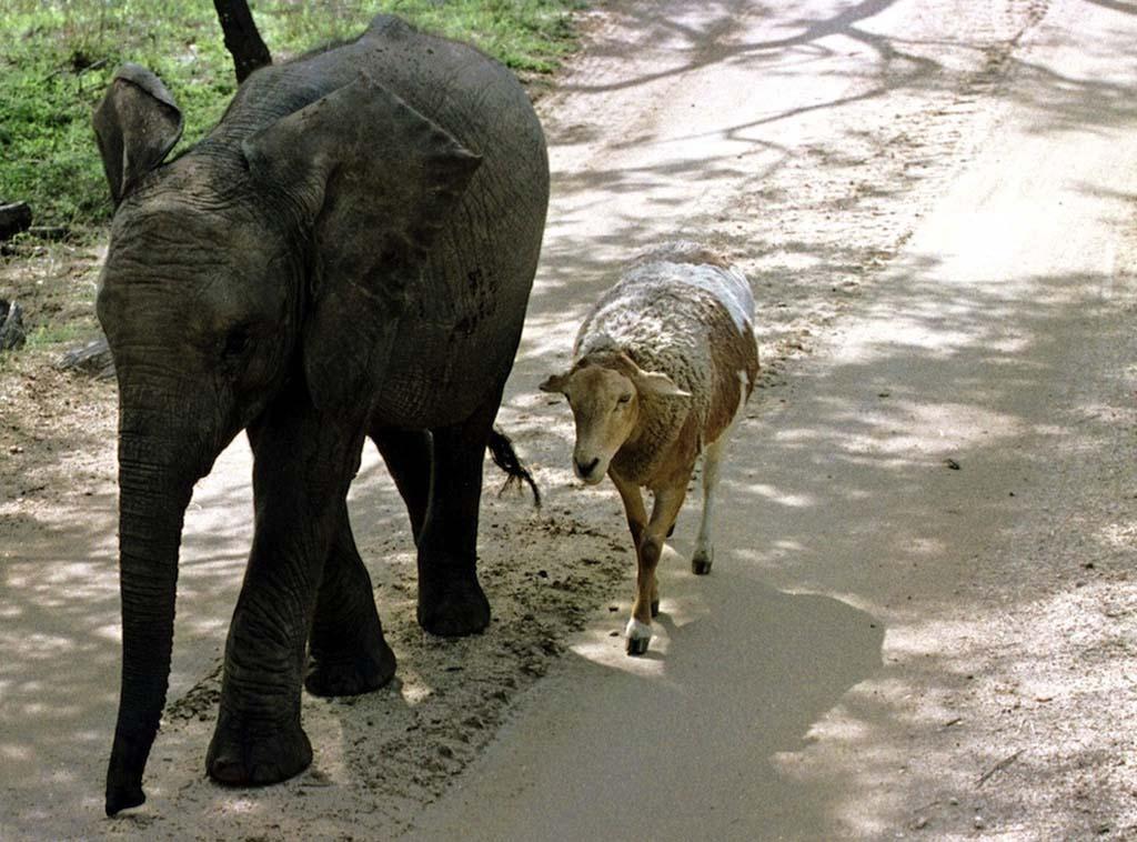 AnimalOddCouples 19 Самые странные парочки животных