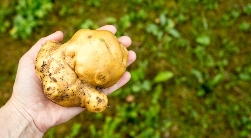 Треть фермерских овощей и фруктов слишком уродливы для продажи