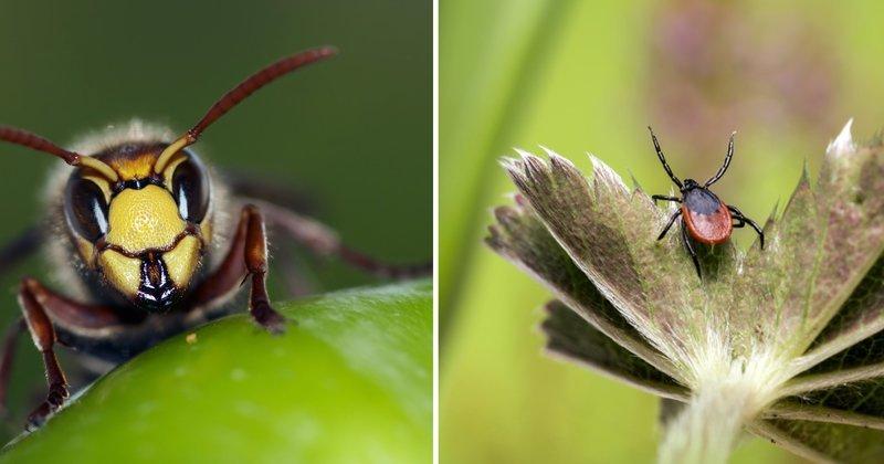 Шесть опасных насекомых Росс…