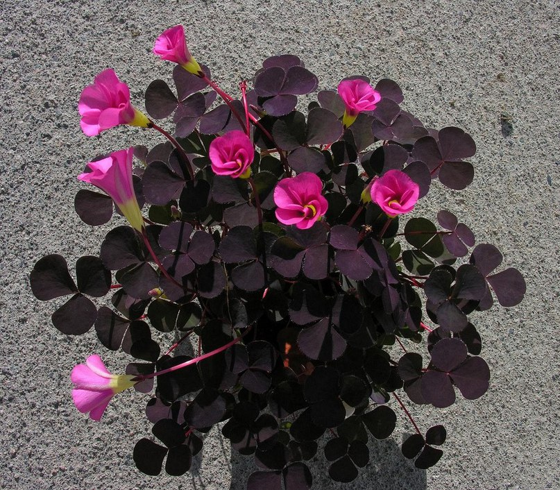 Магические и целебные свойства растений