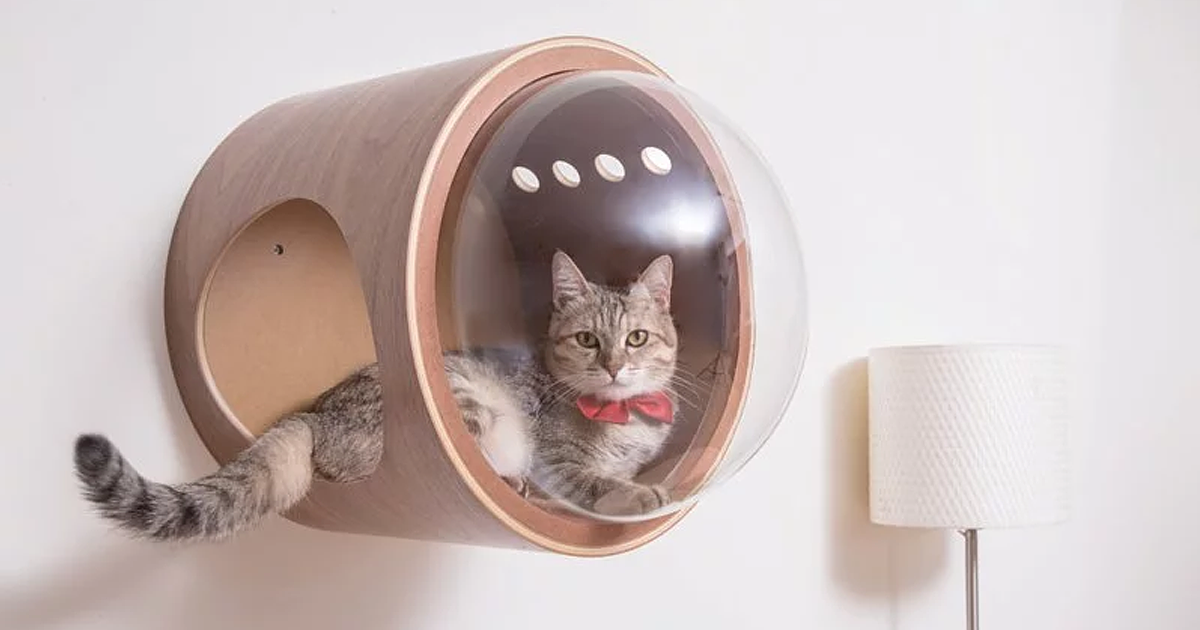 'Spaceship' Cat Beds For Your Little Explorers To Observe The Universe