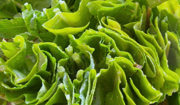 полезные продукты: листовые овощи