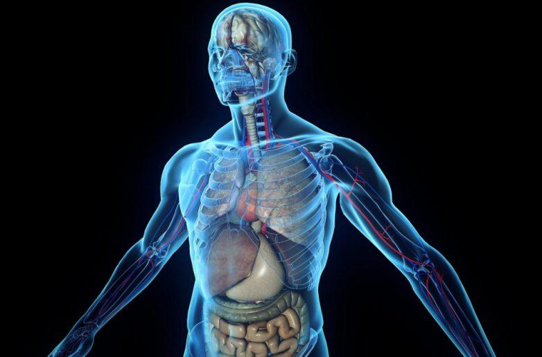 Пачка мерзких фактов о нашем организме