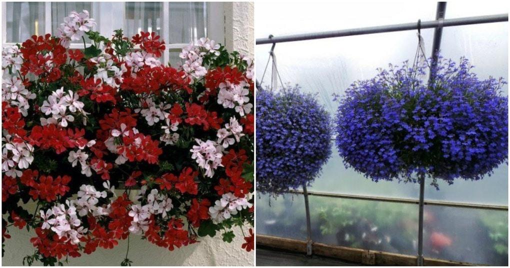 ТОП-8 красивых ампельных растения для вашего сада