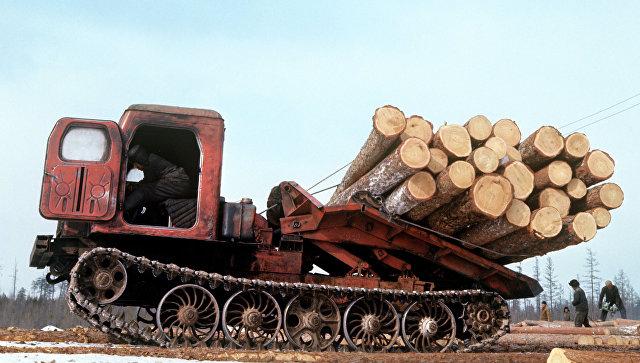 """""""Китайцы спилили все"""". Кто на самом деле уничтожает русский лес"""