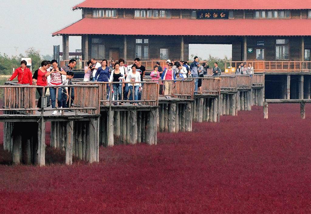 Красный пляж в Китае (8 фотографий), photo:7