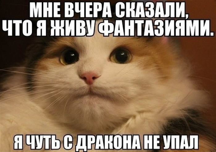 Крутые мемы с котиками, с ко…