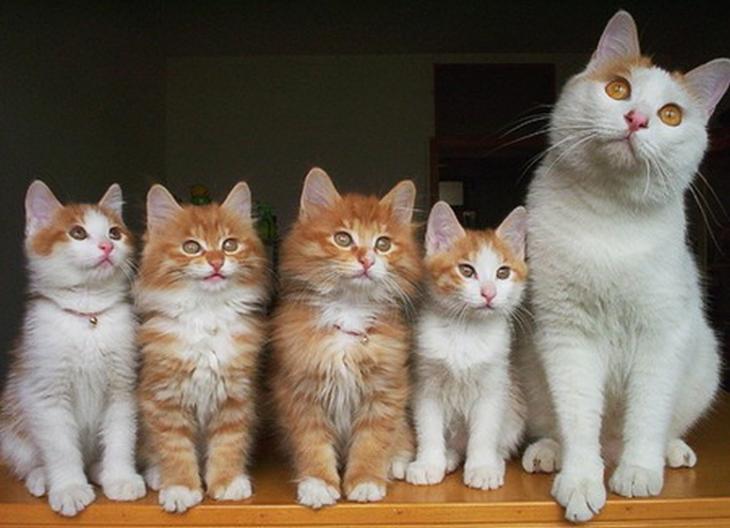 Гордые мамы-кошки со своими …