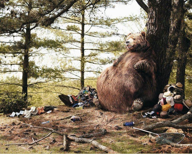 Что делать при встрече с медведем