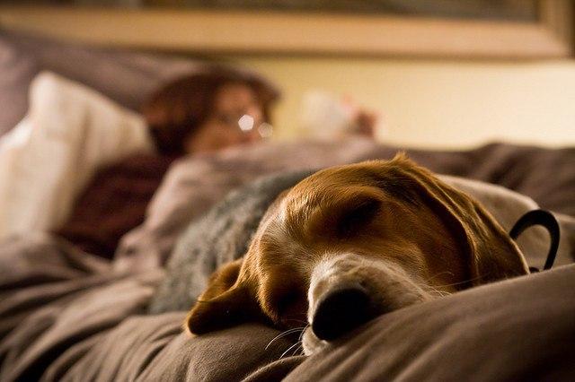 Стоит ли позволять собаке сп…