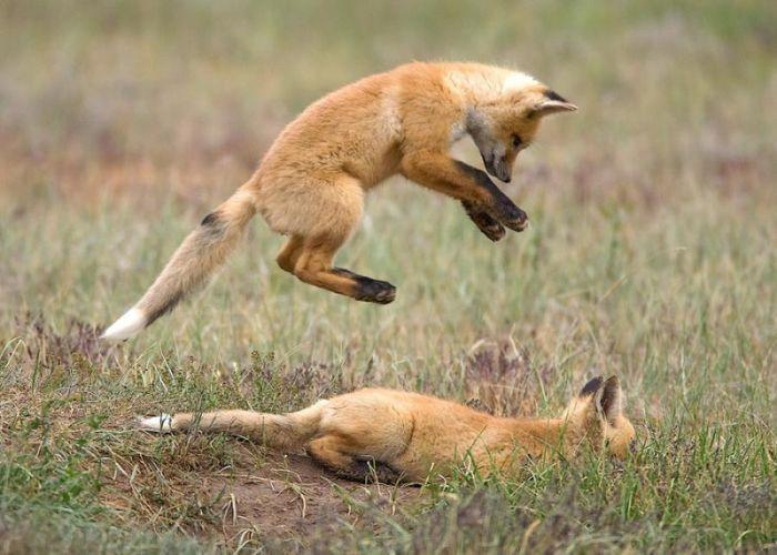 fox_20120409_00640_021 (700x500, 61Kb)
