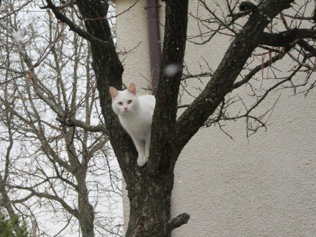 Раз в жизни белоснежный кот Санта приблизился к людям, чтобы попросить еды… И за это получил пулю