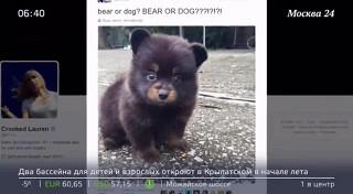 Щенок или медведь?