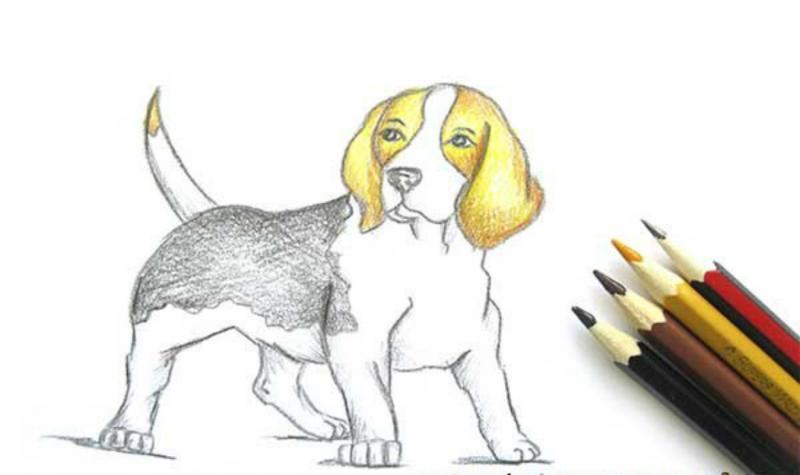 Интересные способы рисования собак популярных пород в разных позах