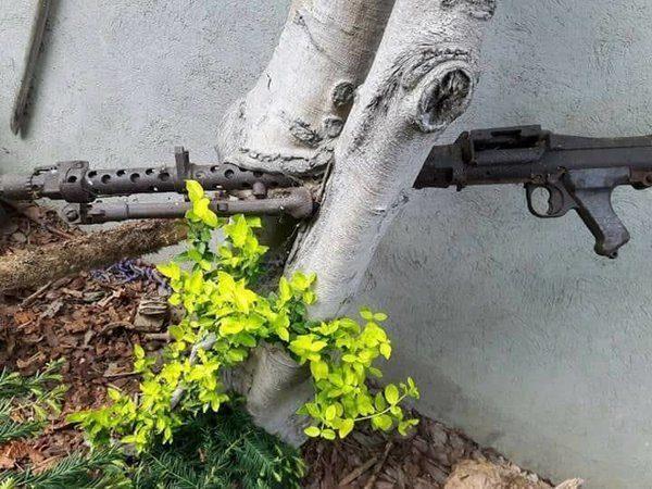 Оружие Великой Отечественной войны, вросшее в деревья