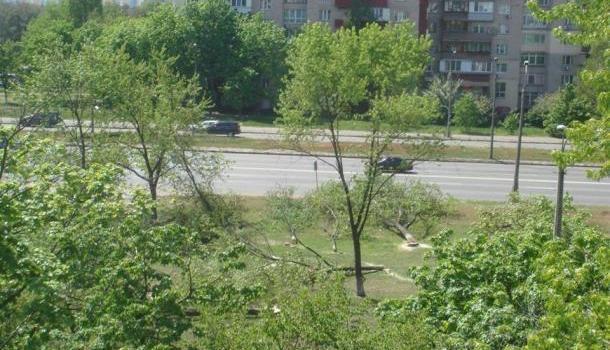 Протест против застройки: киевляне перекрыли дорогу срубленными деревьями