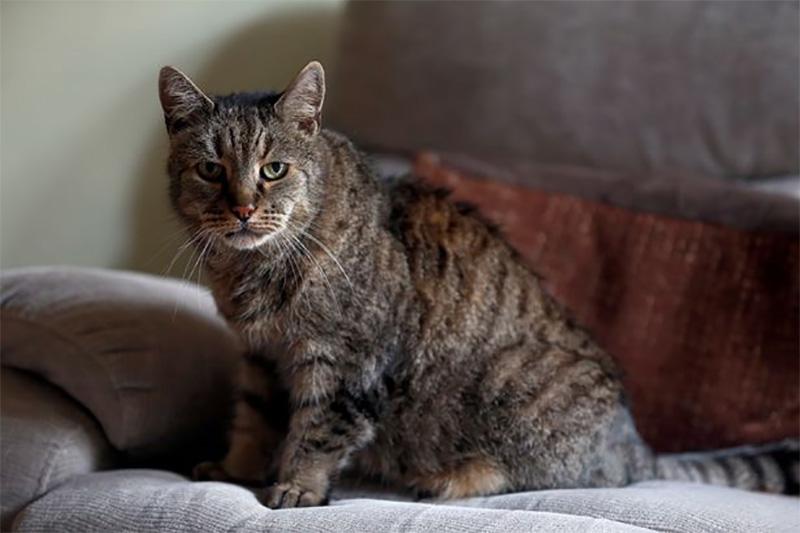 Все 9 жизней прожиты: самый старый кот на планете умер в возрасте 32 лет