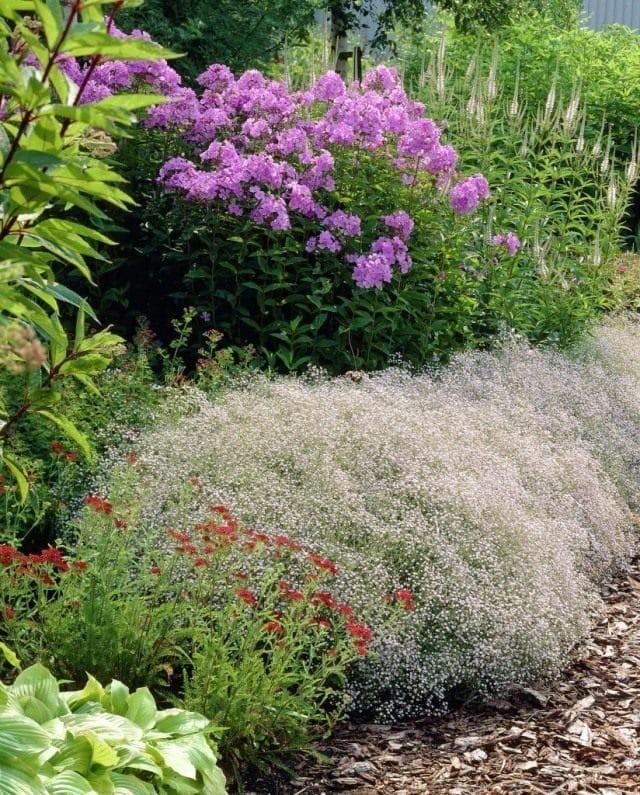 Живое кружево: вуальные растения для украшения участка