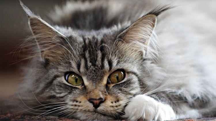 С точки зрения кота