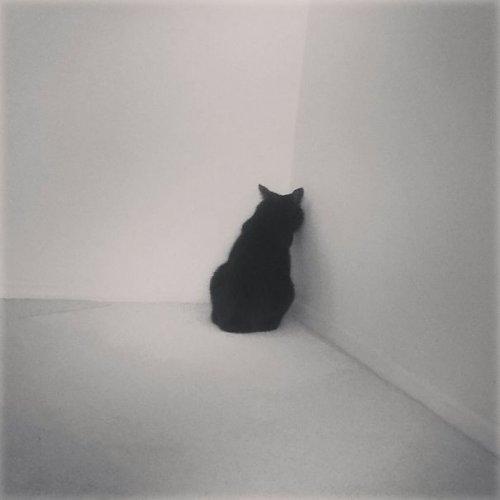 Самые артистичные кошки, достойные Оскара (29 фото)