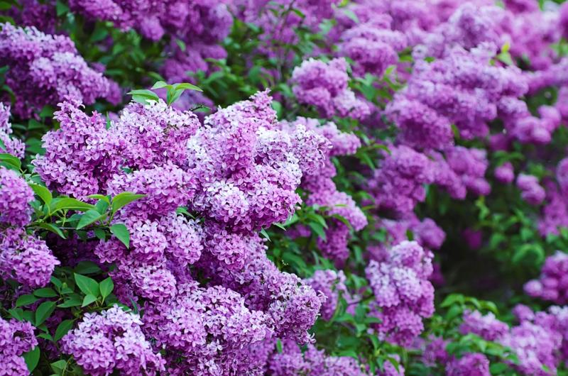Успей в самый пик цветения: …