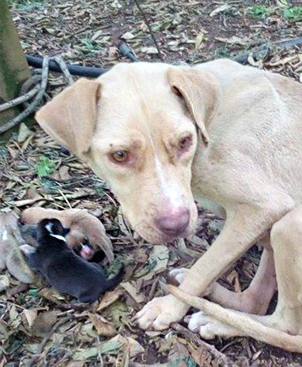 Материнское сердце и… верёвка на шее! Лару оставили умирать в лесу, но у неё было ради кого жить