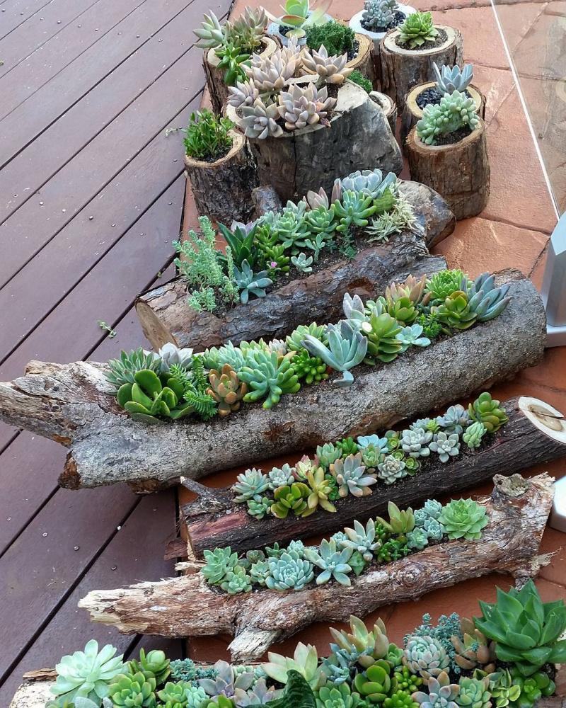 Коряги, ветки и растения... Идеи для творчества
